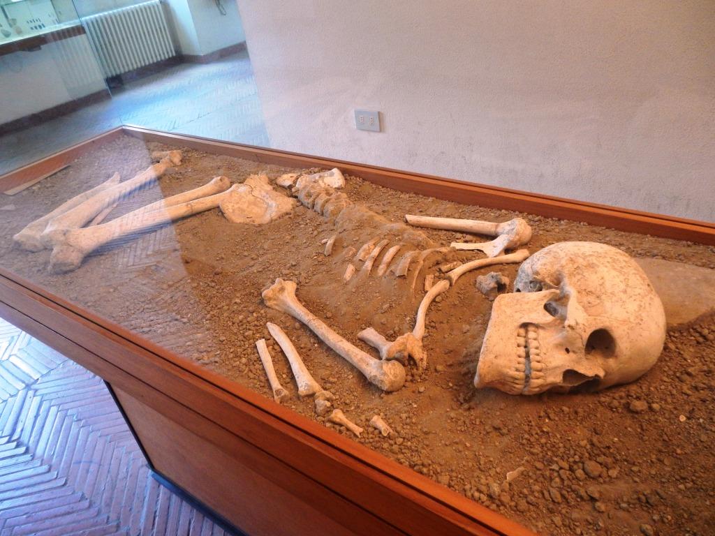 Scheletro umano dell'Età del Bronzo (IV mill a.c.) / Human skeleton of Bronze Age (IV mill. b.c.)